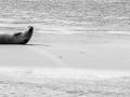 Seehundbank-173