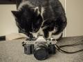 Canon ae1 program-4879.jpg