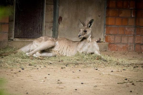Krefeld_Zoo_135