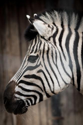Krefeld_Zoo_153