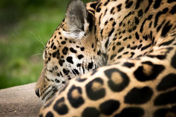 Krefeld_Zoo_164
