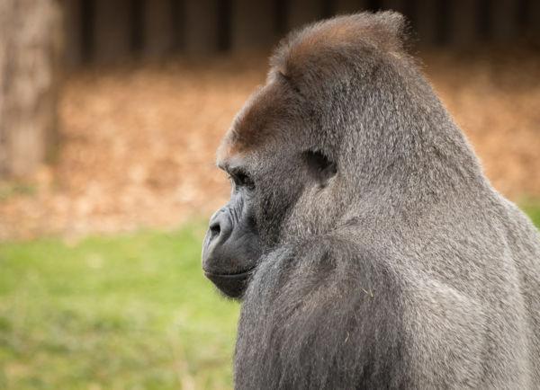 Krefeld_Zoo_63-2