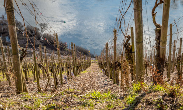 Ab in den Weinhang