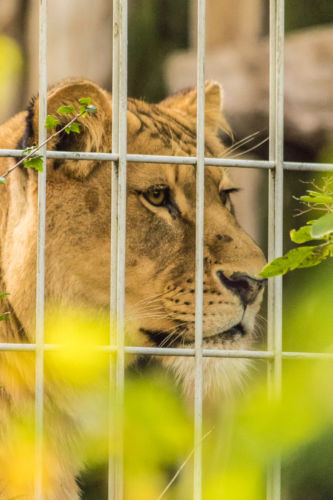 Zoo Münster (12)