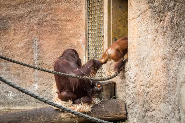 Zoo Münster (13)