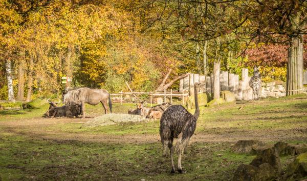Zoo Münster (8)
