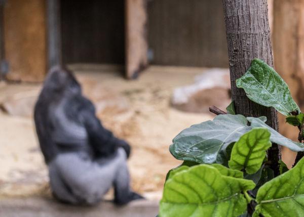 Zoo_23.06.17_134-2