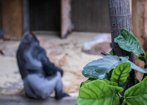 Zoo_23.06.17_134