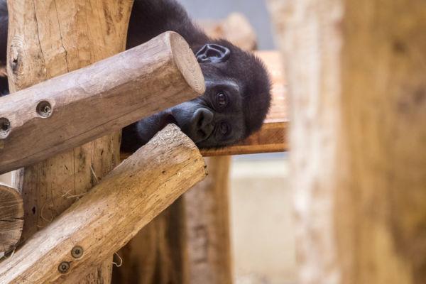 Zoo_23.06.17_19